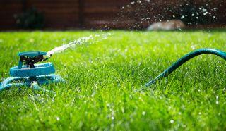 7 prostych sposobów na pielęgnacje idealnego trawnika